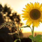 Summer Safety Tips for Those with Dementia